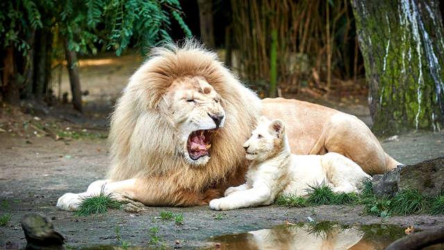 Evasion familiale au Zoo de la Flèche et nuit en roulotte