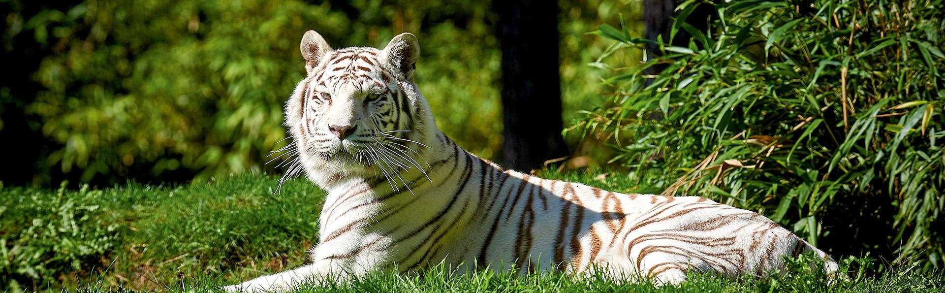 Charme et visite du Zoo de la Flèche aux portes du Mans