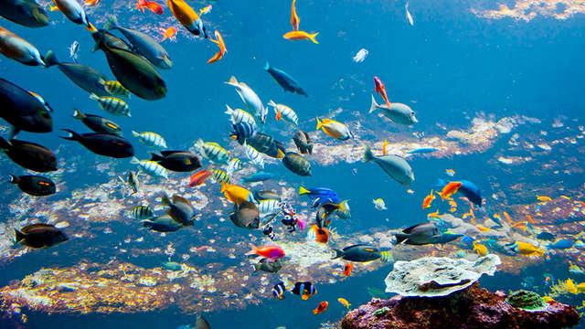 Découverte des océans avec entrée au parc Nausicaa à Coquelles