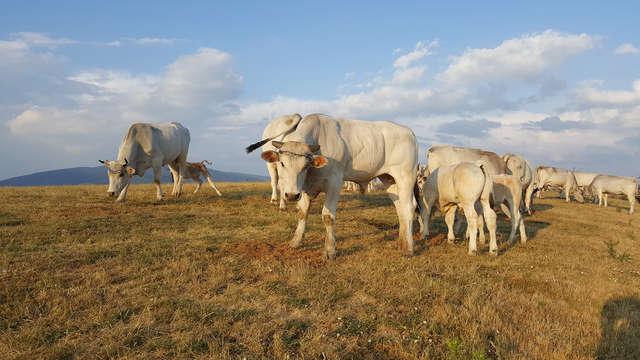 Agriturismo Bio I Rondinelli