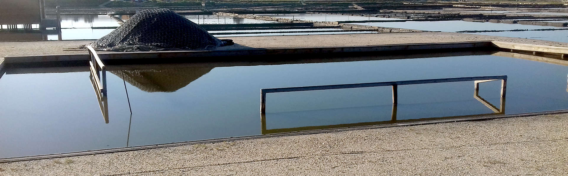 Descubre salinas con visita guiada y alójate en el centro de la preciosa Aveiro