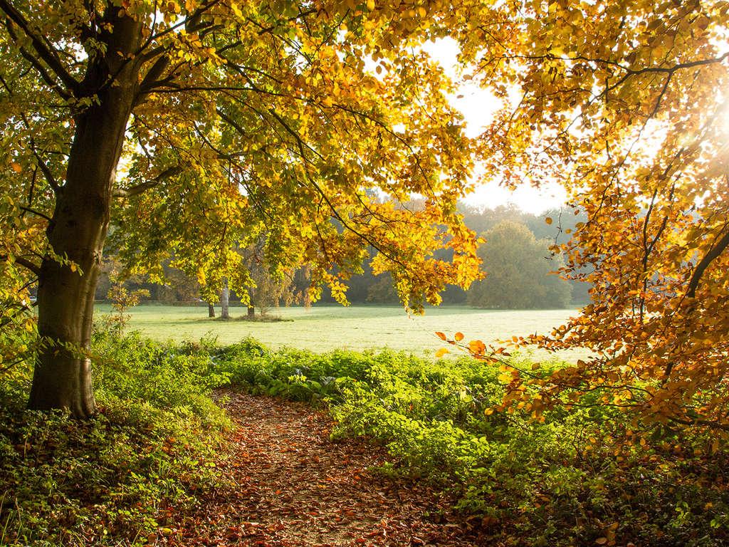 Pause nature au coeur des Ardennes belges 3*