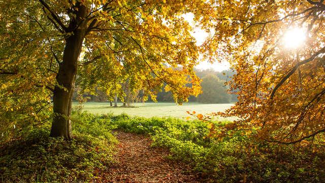 Descanso en plena naturaleza en las Árdenas belgas