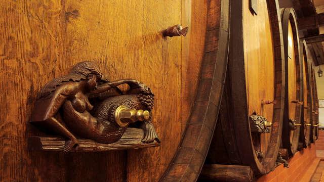 Dégustation de vins sur la route des vins