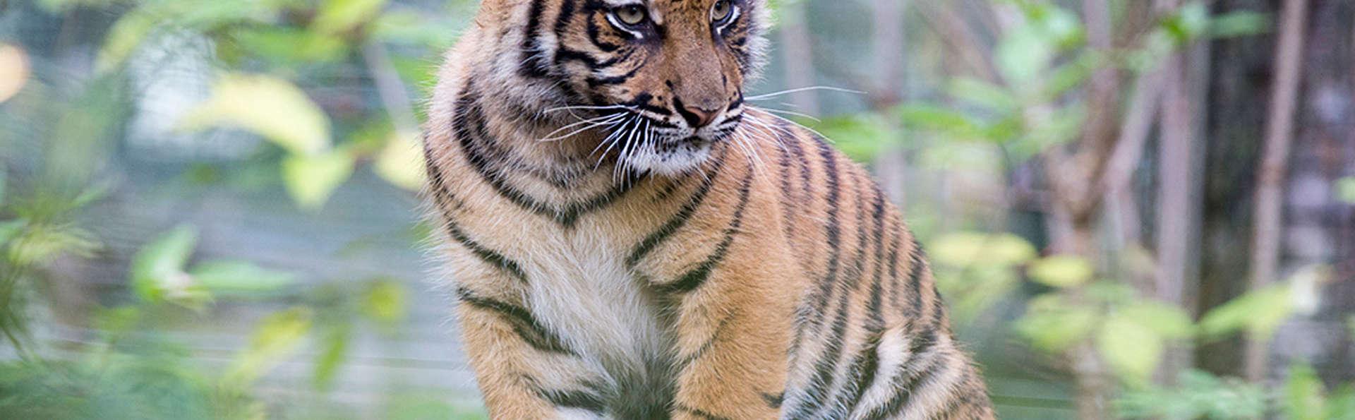 Séjour en famille et entrées au Zoo de Beauval (Jusqu'à 6 personnes)