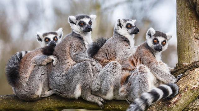 Entrée au Zoo de La Barben et séjour à Salon-de-Provence