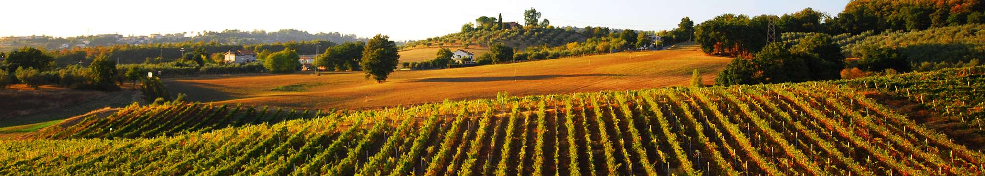 Escapadas fin de semana en Ruta del vino y del brandy Marco de Jerez