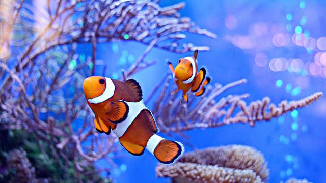 Entrée à l'Aquarium du Limousin (1 Jour) du 19/06/2018 au 30/06/2019 et séjour 3* à Limoges