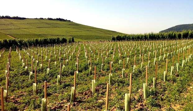 Séjour de charme et dégustation de vin en Alsace