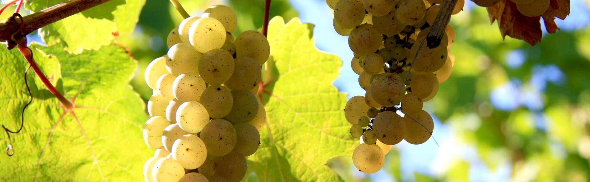 Escapade près de Colmar avec dégustation de vins