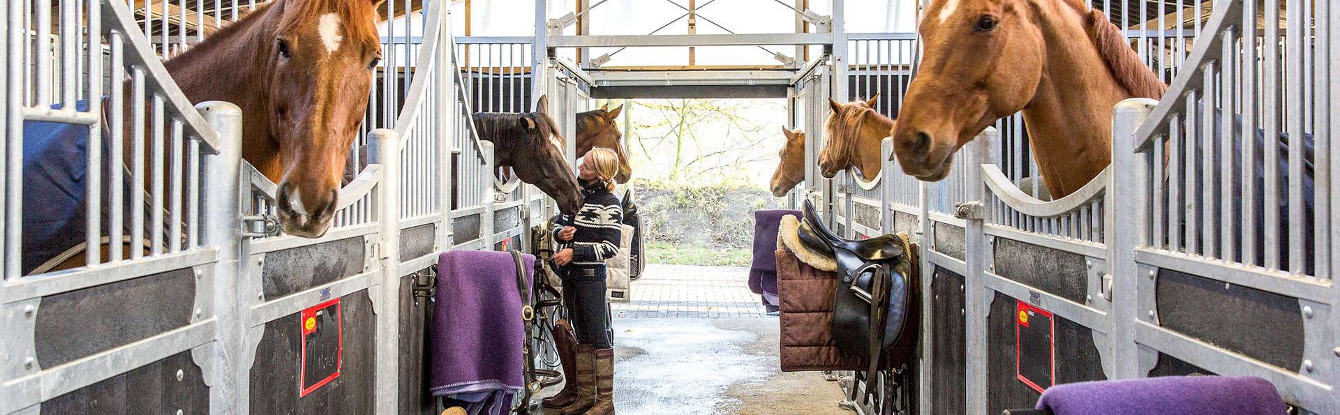 Van der Valk Apeldoorn - de Cantharel - EDIT_N3_HORSE.jpg