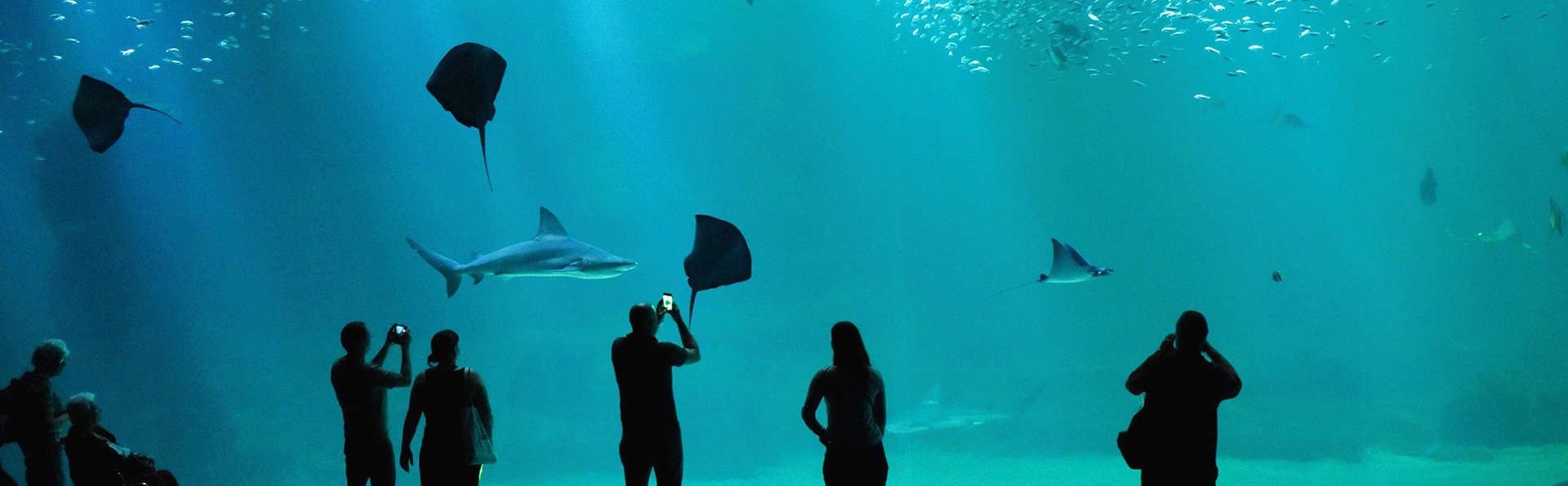 Séjour découverte avec entrée à l'Aquarium Nausicaa