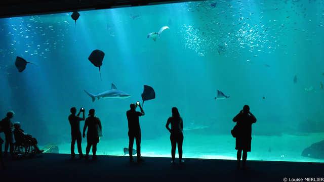 Relaxt op ontdekking met toegang tot het Aquarium Nausicaa