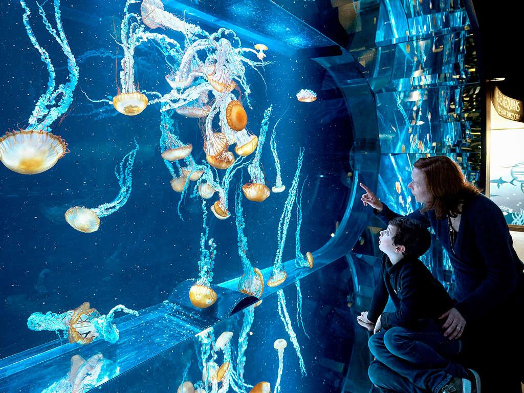 Séjour Nord-Pas-de-Calais - Week-end avec entrée à l'Aquarium Nausicaa  - 3*