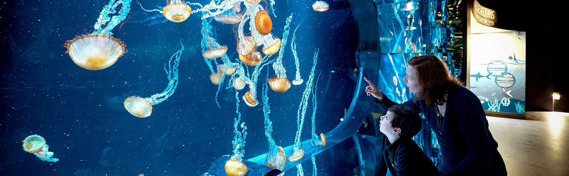 Escapade découverte sur la Côte d'Opale avec entrée à l'Aquarium Nausicaa