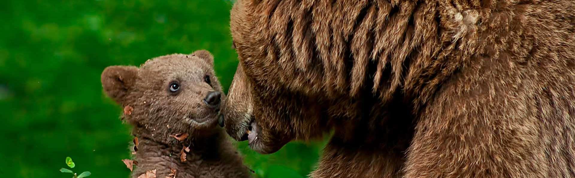 Séjournez près de Salon de Provence et visitez le zoo de la Barben