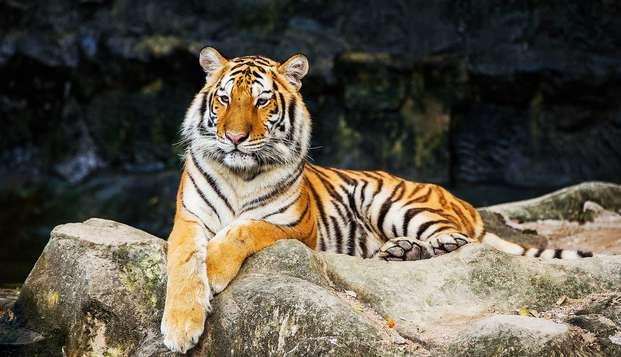 Partez à la rencontre de plus de 650 animaux et séjournez dans une bastide provençale !