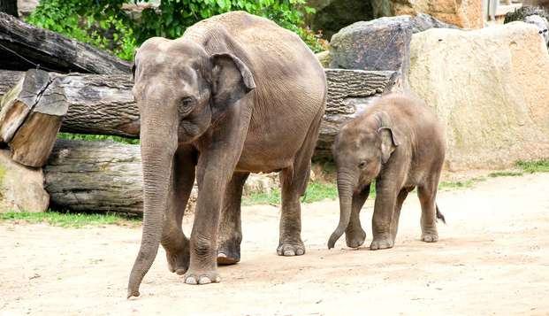 Venez rencontrer les 700 animaux du Zoo de la Barben, et séjourner à Aix en Provence