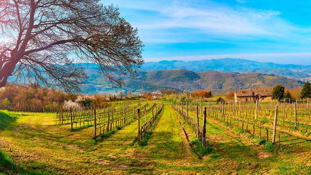 ¡Descubre el centro de Arezzo en Superior con cata de vinos! (desde 2 noches)