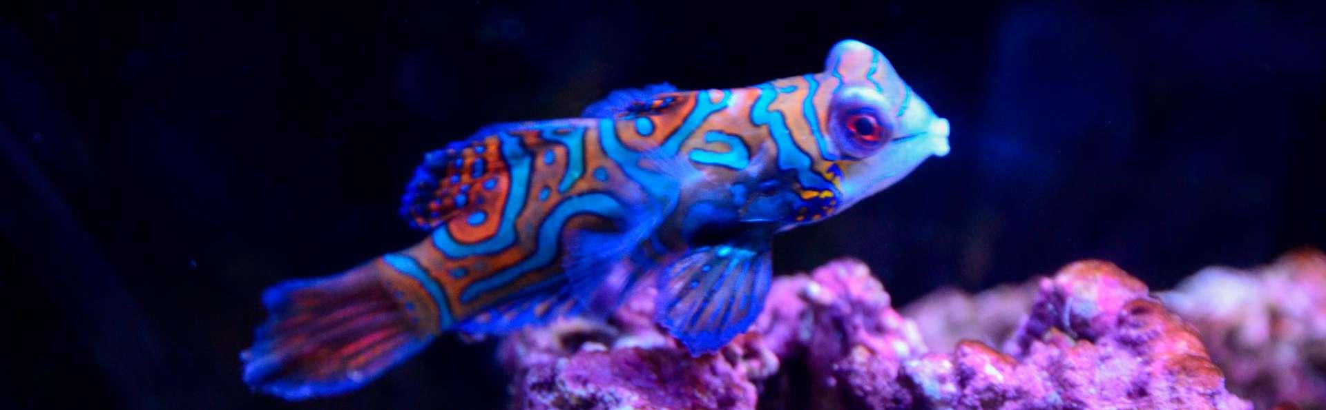 Aquarium de Lyon : Partez à la découverte de la splendeur du monde marin !