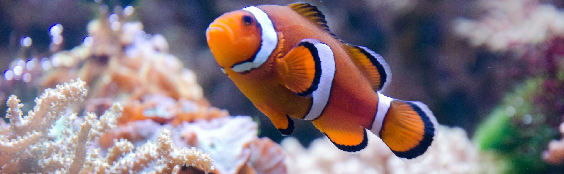 Venez découvrir des poissons du monde entier, dans l'aquarium de Lyon !