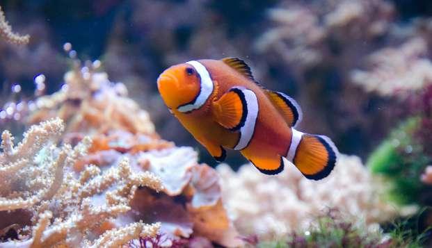 Découvrez Lyon et son aquarium incroyable, au multiples espèces !