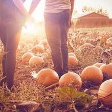 Arrangementen Halloween