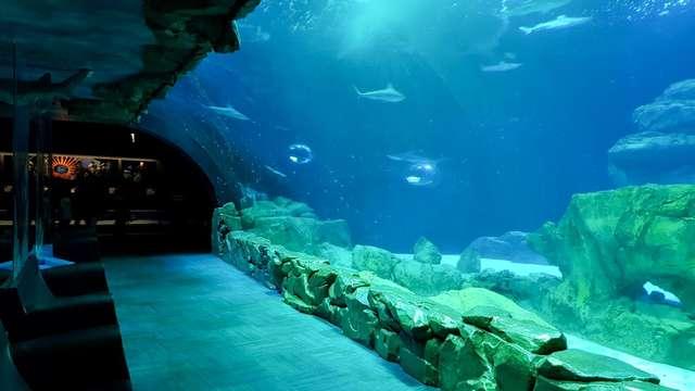Estancia a dos pasos de los Campos Elíseos y visita al Aquarium de París
