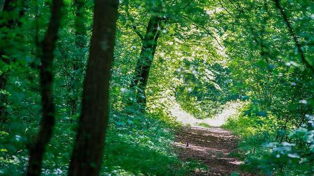 Escapade dans la nature à Esch-sur-Alzette (à partir de 2 nuits)