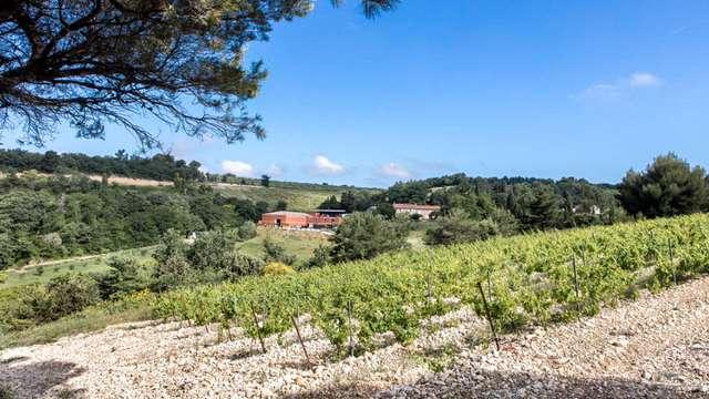 Visite de vignobles et séjour entre amis près d'Avignon