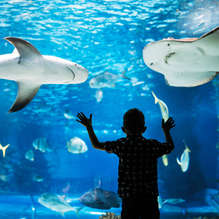 Week-end Zoos & Aquariums