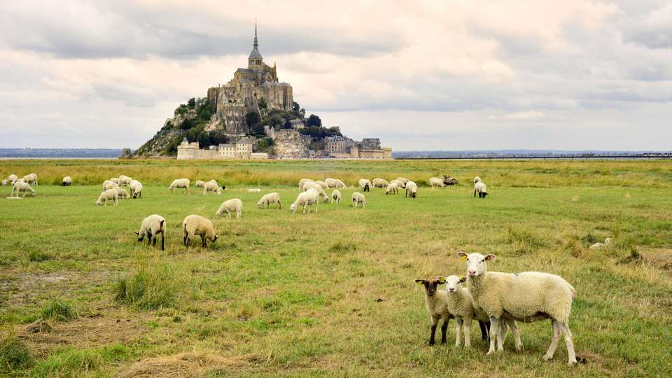 Mouton Blanc - EDIT_MONT_SAINT_MICHEL_13.jpg