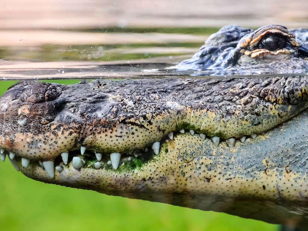 Séjour Poitou-Charentes - Week-end en famille avec entrées sur la Planète des Crocodiles (à partir de 2 nuits)  - 3*