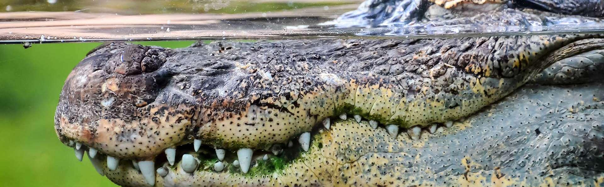 Week-end en famille avec entrées sur la Planète des Crocodiles (à partir de 2 nuits)