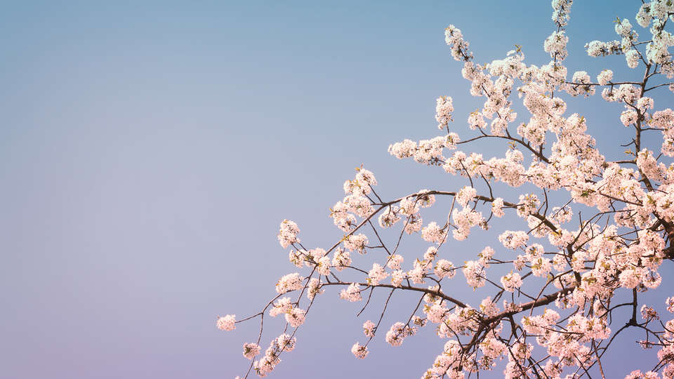 Borgo Rosso di Sera Resort - Edit_Spring19.jpg