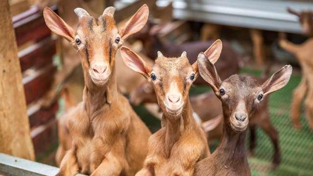 Especial Familias: Interactúa con los animales de la granja y disfruta viendo tus hijos sonreir