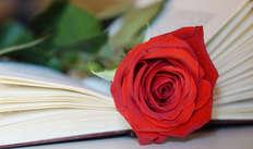 Rose de Saint Jordi