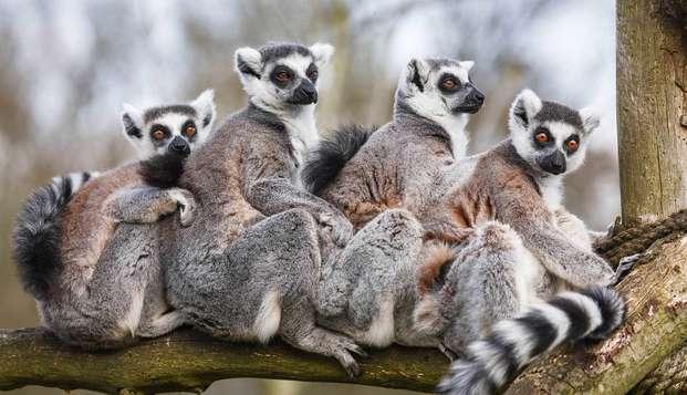 Een beestig leuk en leerzaam bezoek aan dierenopvangcentrum de Zonnegloed (vanaf 2 nachten)