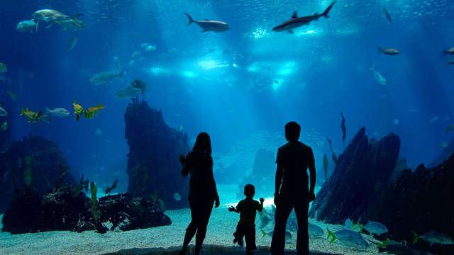 Ontdek de wondere wereld van de dolfijnen, zeeleeuwen en zeehonden (vanaf 2 nachten)