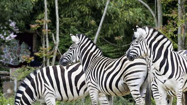Week-end à Metz et visite du Zoo d'Amnéville