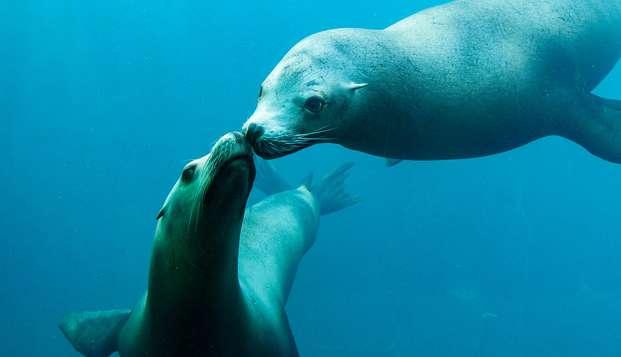 Immersion dans le monde marin en famille avec entrée à Nausicaa