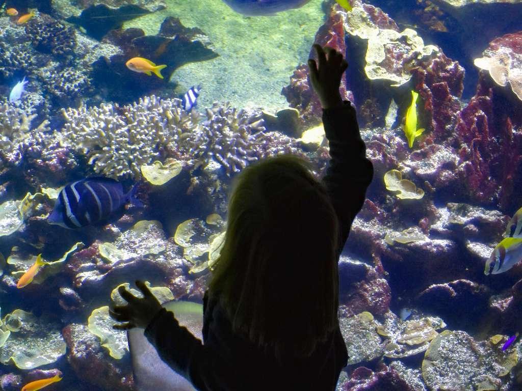 Séjour familial à l'Aquarium Nausicaa 4* - 1