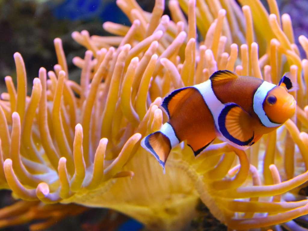 Séjour Pas-de-Calais - Week-end sur la Côte d'Opale avec entrée à l'Aquarium Nausicaa  - 3*
