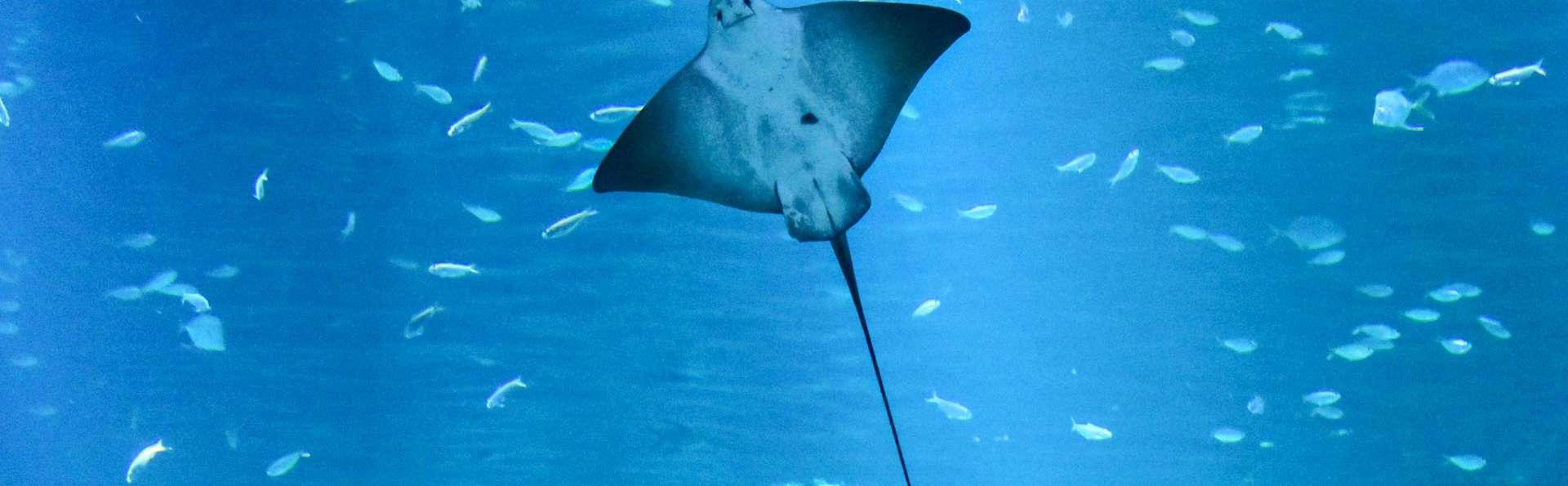 Escapade découverte avec entrée à l'Aquarium Nausicaa