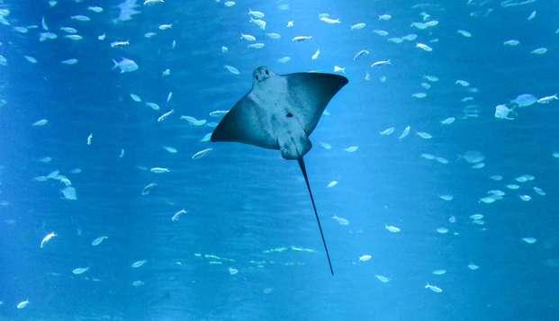 Découverte en famille des fonds marins avec entrée à Nausicaa