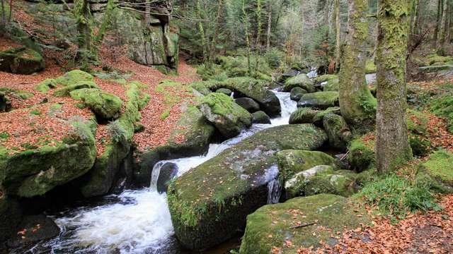La paix au cœur du Parc Naturel Régional du Livradois Forez