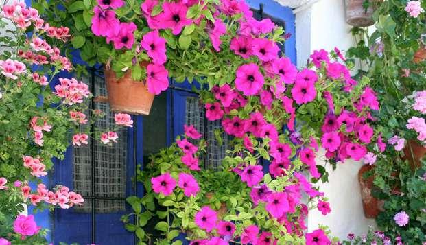 Descubre el encanto de Córdoba con el tour de los patios
