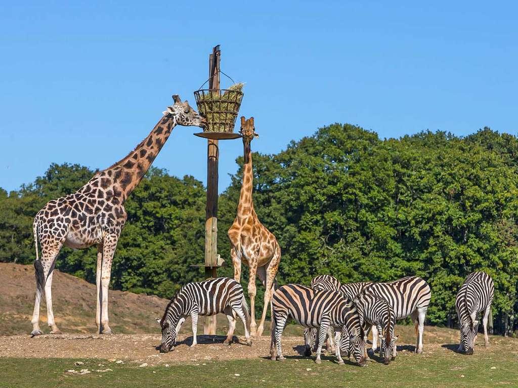 Voyage Europe - Week-end avec entrée au ZooSafari de Thoiry  - 4*