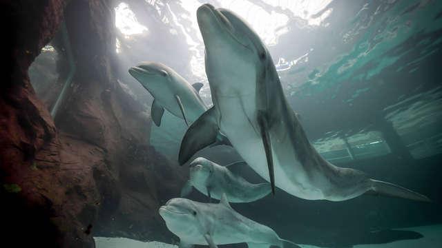 Geniet met het hele gezin van de dolfijnenshow in dierentuin Duisburg (vanaf 2 nachten)