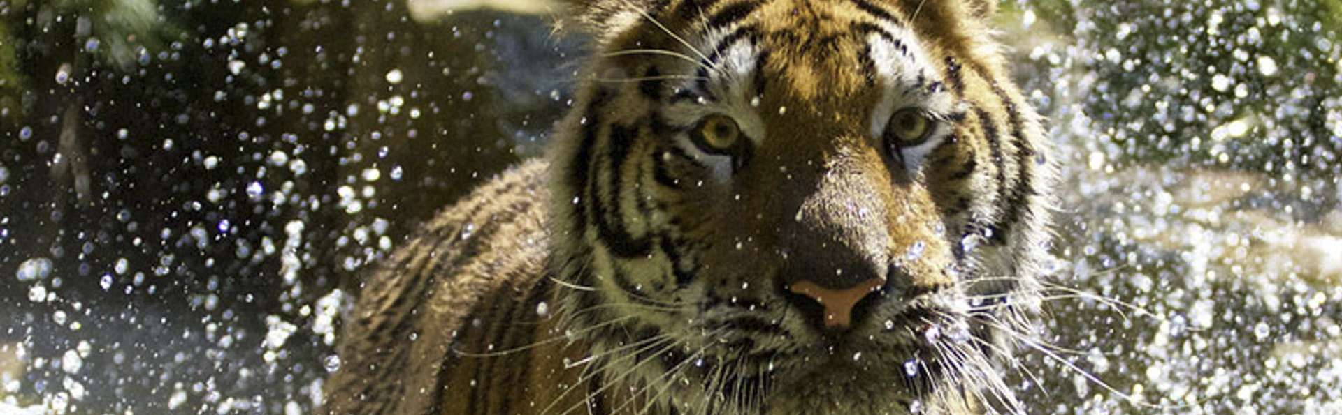 Faites le tour du monde en un jour au zoo Gaia et séjournez à Aken (à partir de 2 nuits)